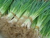 吃葱可增进食欲刺激血液循环