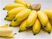 坐月子能吃香蕉吗
