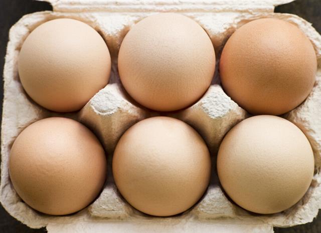 儿童吃鸡蛋勿陷入六大误区