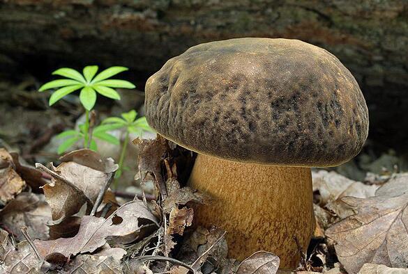 蘑菇的功效与作用_蘑菇的营养价值_蘑菇的适合体质