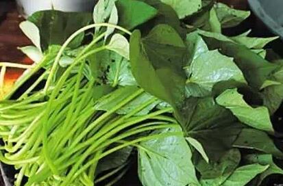 红薯叶的功效与作用_红薯叶的营养价值_红薯叶适用人群