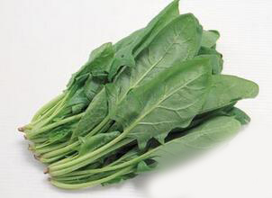菠菜的功效与作用_菠菜的饮食禁忌_菠菜的营养价值