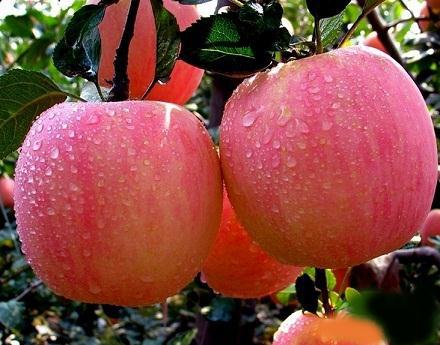 苹果的功效与作用_苹果的营养价值_苹果的适合体质