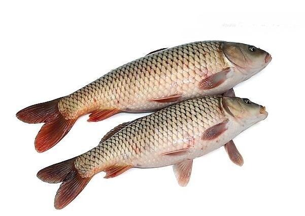 鲤鱼的制作技巧 鲤鱼的适合体质