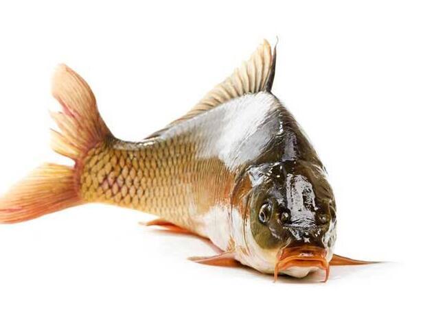 鲤鱼的营养价值 鲤鱼的存储方法