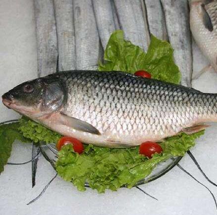 鲤鱼的食用方法