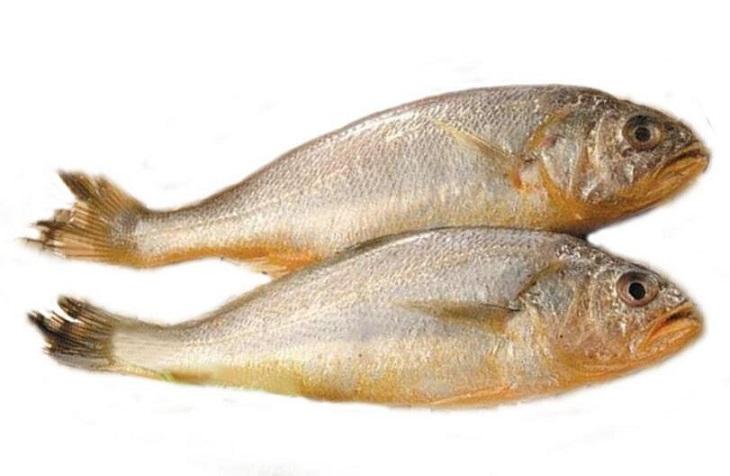 黄鱼的选购技巧