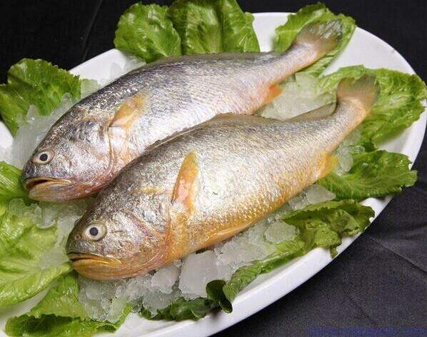 黄鱼的功效与作用 黄鱼的营养价值