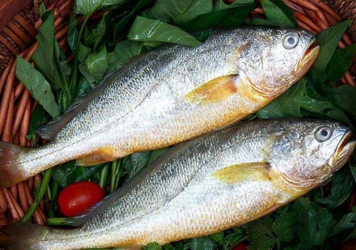 黄鱼(黄花鱼)的食用效果 黄鱼的制作技巧