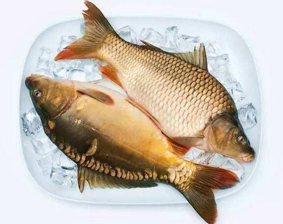 鲤鱼的功效与作用