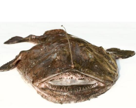 安康鱼存储方法_安康鱼食用_安康鱼食疗