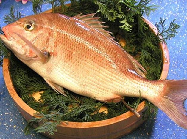 鲷鱼的功效与作用_鲷鱼的营养价值