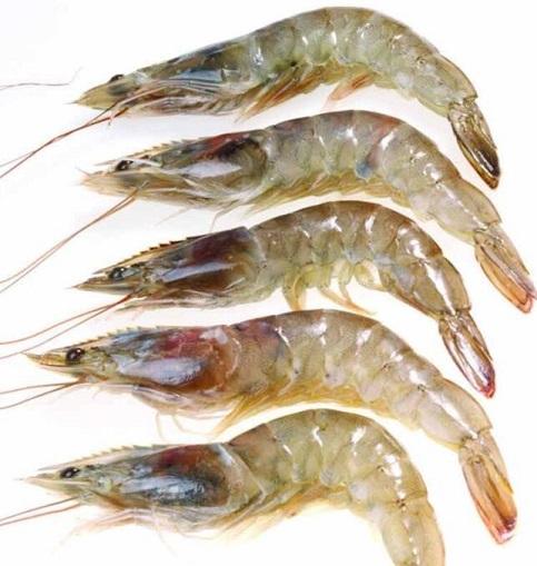 青虾的功效与作用_青虾的食用禁忌_青虾的适合体质