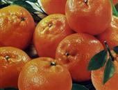 盘点能增强记忆力的水果