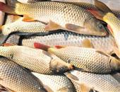 鲤鱼鱼白汤怎么做有哪些食疗功效