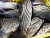红烧鲤鱼怎么做 鲤鱼怎么做好吃
