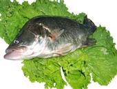 补气养胃桂鱼的食用功效