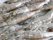 怀孕期间可以吃海虾吗,产妇为什么能吃海虾呢,孕期吃海虾对身体有哪些影响
