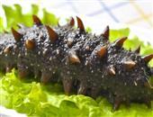 海参功效多 常吃可延缓衰老提高免疫力