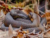 水蛇的营养价值