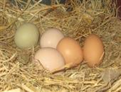 男人吃土鸡蛋更营养吗