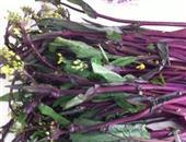三种营养美味的红菜苔做法
