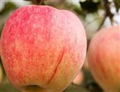 秋里蒙苹果