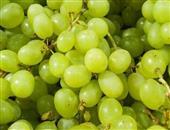 马奶子葡萄