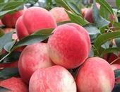 桃的功效与作用_桃的营养价值_桃的适合体质_桃的食用禁忌