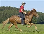 骑马(加马鞍)