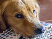 照顾宠物(逗玩、坐着、轻度活动)