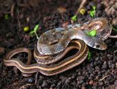 蛇主要价值_蛇科学价值_蛇经济价值