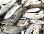 孕妇能吃草鱼吗 孕妇吃吃草鱼需要注意哪些事项