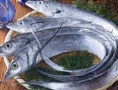 春天到了,多吃带鱼营养高春