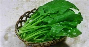 菠菜根的营养价值你知道哪些?