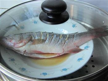 葱油清蒸鲈鱼的做法图解5